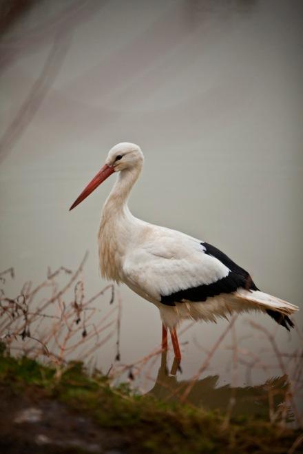 flamingolandstork3